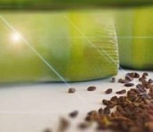 Peganum Harmala Seed Usage, DMT Effect, benefits and harms