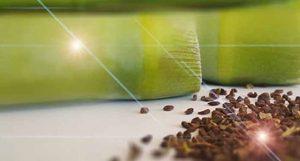 Peganum Harmala, Usage, DMT Effect, benefits and harms, Harmala Diet